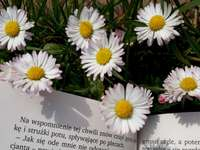 daisies and a book