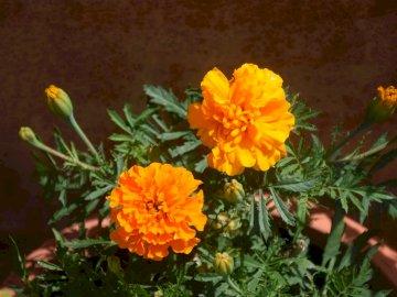 ładna pomarańcza 2020 - ładna pomarańcza 2020. Wazon z kwiatami na żółtym kwiacie.