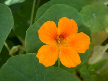 orange sur vert - orange sur vert. Un gros plan d'une plante verte.
