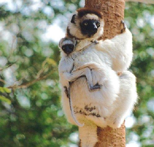 Διακοπές στη Μαδαγασκάρη