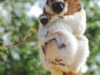 Feriados em Madagascar