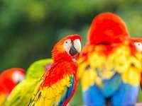 Foto pappagallo