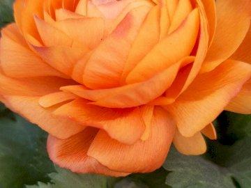 julieta piñeyro - Blume aus dem Garten meiner Großmutter rosa. Eine Nahaufnahme einer Blume.