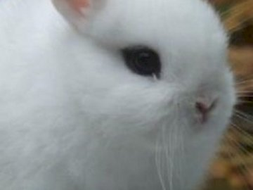 bunny 12 and 34 5 6 7 - Little sweet white bunny. With black eyes. Very soft and delicate. Just lovely. And charming. And I