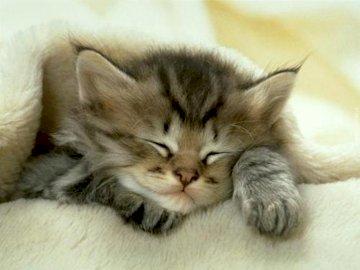 Mały uroczy kotek 123456
