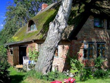 Dov'è la mia casa - Una casa dietro un grande albero. Un albero di fronte a un edificio di mattoni.