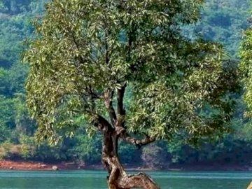 zdeformowane drzewo - zdeformowane drzewo na małej górze. Drzewo obok akwenu.