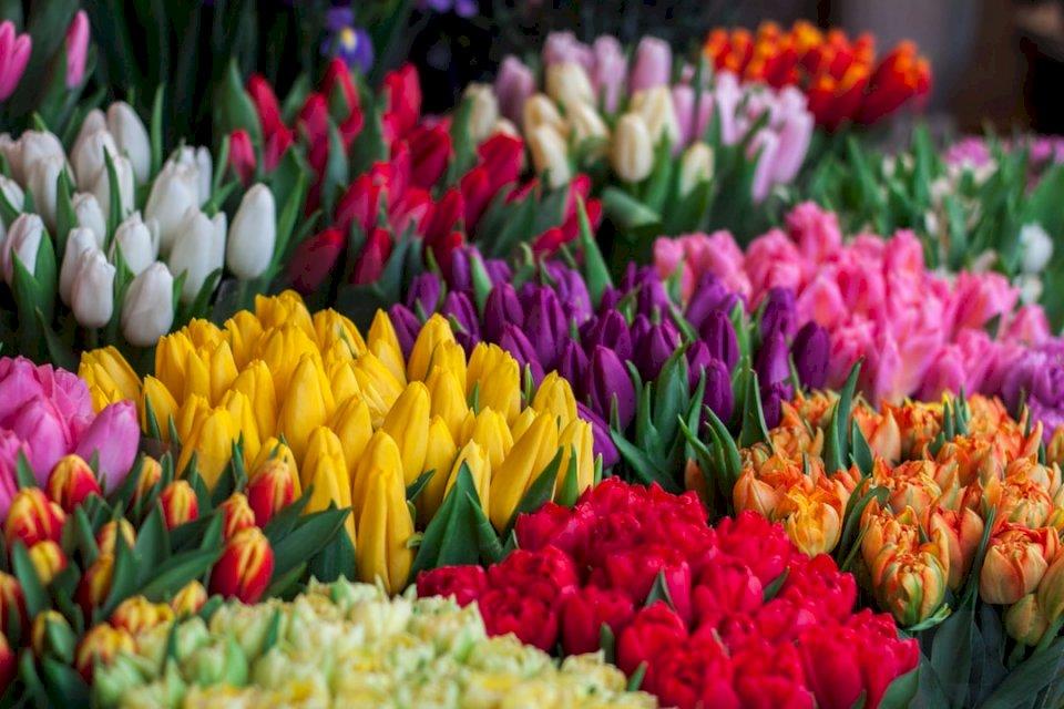 Jag gjorde 2 vackra foton av - Blandade blommor. Lviv, Ukraina. En grupp färgglada blommor (10×10)