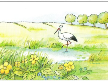 FRÜHLINGSWIESE - Frühlingslandschaft mit einem Storch. Eine Nahaufnahme des Textes auf einem weißen Hintergrund.