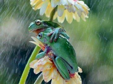 dwie żaby - Dwie żaby na kwiacie.