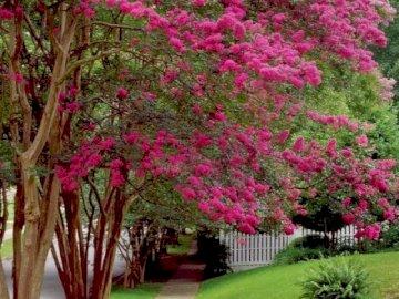 Wiosna w naturze. - Kwitnące na różowo drzewa wiosną. Drzewo z różowymi kwiatami w ogródzie.