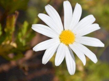 blanc avec vert - blanc avec vert. Un gros plan d'une fleur.