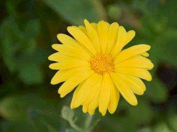 grün und gelb - gelber und grüner Hintergrund. Eine Nahaufnahme einer Blume.