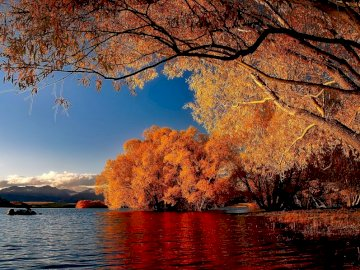 New Zealand - autumn landscape ------------------. A tree in front of a large body of water.