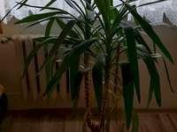 flor em uma panela - flor em uma panela verde frondosa. Um vaso de flores ao lado de uma palmeira.