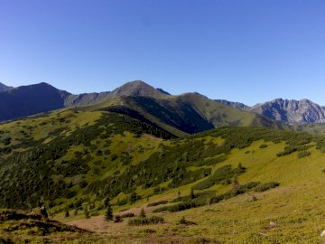 Western Tatras - View from Grzes towards Wołowiec and the Roháče ridge. A herd of cattle grazing on a lush green h