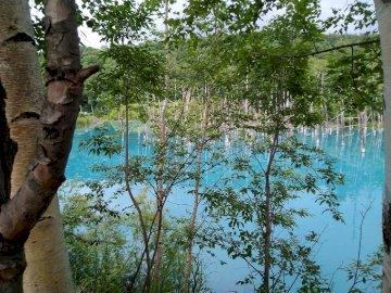 Blue Pond, Hokkaido - Japon, Hokkaido, Blue Pond dans la ville de Biei. Une statue d'un arbre. Japon, Hokkaido, Bl