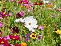 Łąka wiosną