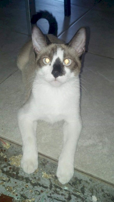 fufufifafi - she is a very beautiful cat with a rat face but beautiful. A cat sitting on a white surface.