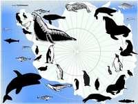 ζώα που ζουν στην Ανταρκτική και την Ανταρκτική - ζώα που ζουν στην Ανταρκτική και την Ανταρκτική.  ζώα π�