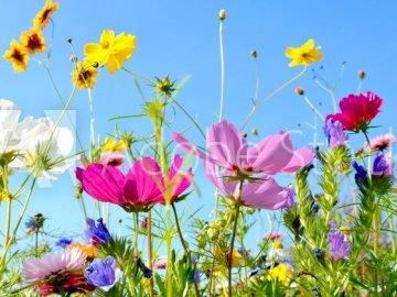 MAI WIESE - BUNTER BLUMENPATCH. Eine Vase mit bunten Blumen.