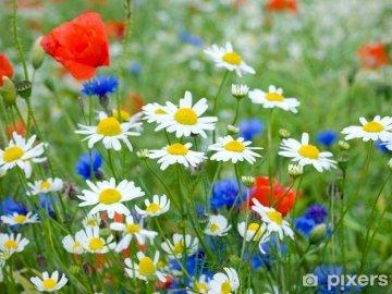 BLUMEN AUF MAI WIESE - BUNTER MAI WIESE. Eine Gruppe bunter Blumen. MAYA WIESE FÜR KINDER. Eine Gruppe bunter Blumen. MAYK