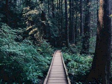 Ścieżka Lasu - Wąska brązowa drewniana ścieżka blisko drewnianego warkocza. Drzewo w lesie.