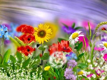 Mai Wiese - Blumen auf der Maiwiese. Ein Bündel lila Blumen.