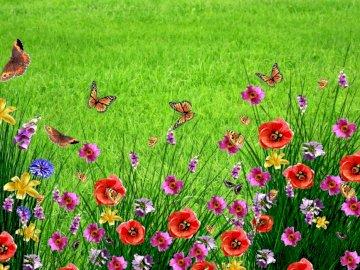 Mai Wiese - Blumen und Insekten auf der Maiwiese gefunden. Eine Gruppe bunter Blumen in einem Feld.