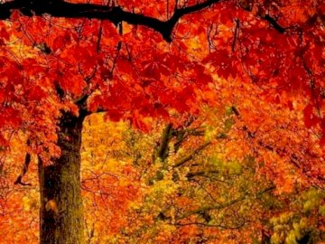An autumn landscape - A pretty autumn landscape. A close up of a tree.