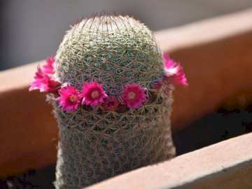 Kaktus mit Blüten im Frühjahr - Kaktus mit Blüten im Frühjahr. Eine Nahaufnahme eines Stückes Kuchen, das oben auf einem Tisch si