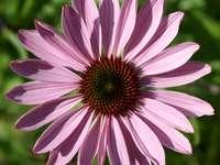 Flores da Primavera - Quebra-cabeça de flores da primavera. Um close-up de uma flor.