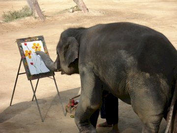 Elefant im Chiang Mai Park - Elefant im Chiang Mai Park. Ein Elefant, der im Sand steht.