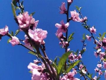 błękit nieba i kwiaty - błękit nieba i kwiaty. Wazon wypełniony fioletowymi kwiatami.