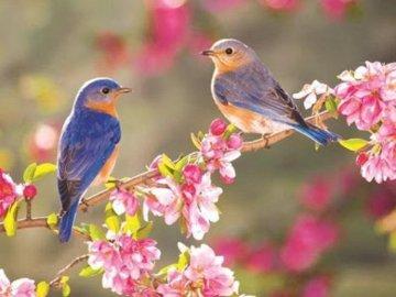 GLÜCKLICHE VÖGEL - DIE VÖGEL TITELN. Ein bunter Vogel thront auf einer Blume.