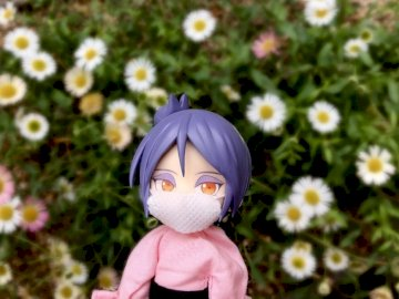 Konan and the daisies - Konan in the middle of the daisies.