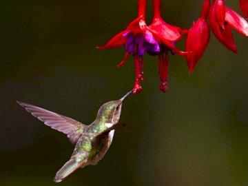 Ohne Titel - . Ein Kolibri, der sich von einer Pflanze ernährt.