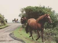 Άλογα σε πλακόστρωτο δρόμο