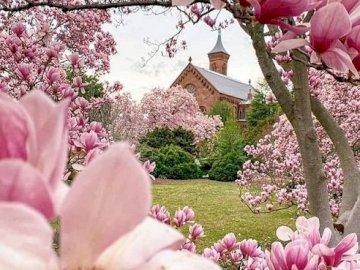 Magnolias rosas - . Un jarrón lleno de flores rosas.