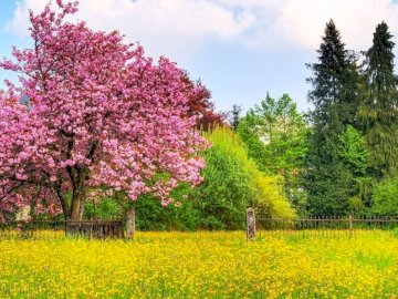 Spring Meadow and Trees - . A tree in a field of green grass.