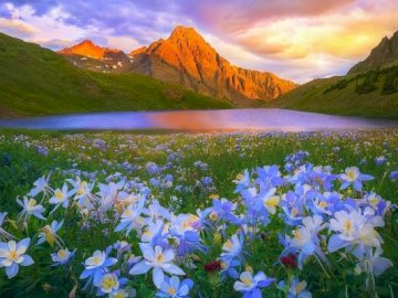 Lakes In The Mountains, Blue Flowers - . A lake with a mountain in the background.