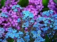 Полеви цветя