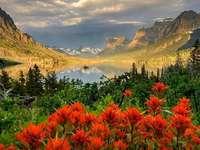 Belleza del mundo. - . Un grupo de flores de colores.