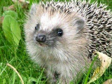 Frühlingstier - . Ein kleines Tier, das Gras frisst. Wer wacht aus dem Winterschlaf auf?