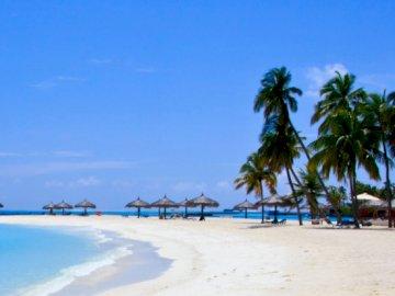 Maldives - . A group of palm trees on a beach.