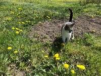 Zuzia entre flores-leão. - . Um pássaro com uma flor amarela em um campo.