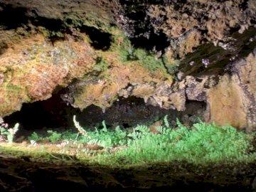plantas en la cueva - . A cerca de una roca con el Parque Nacional de las Cavernas de Carlsbad en el fondo.