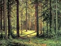Barrskog på morgonen