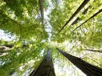 Koruny listnatých stromů