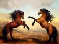 Paarden, prachtige dieren